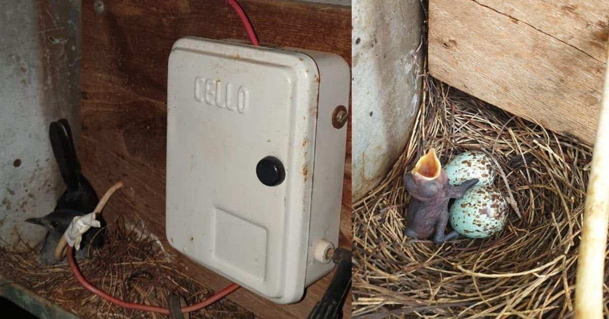 TN Village Turned Off Street Lights For Over a Month To Protect a Bird's Home