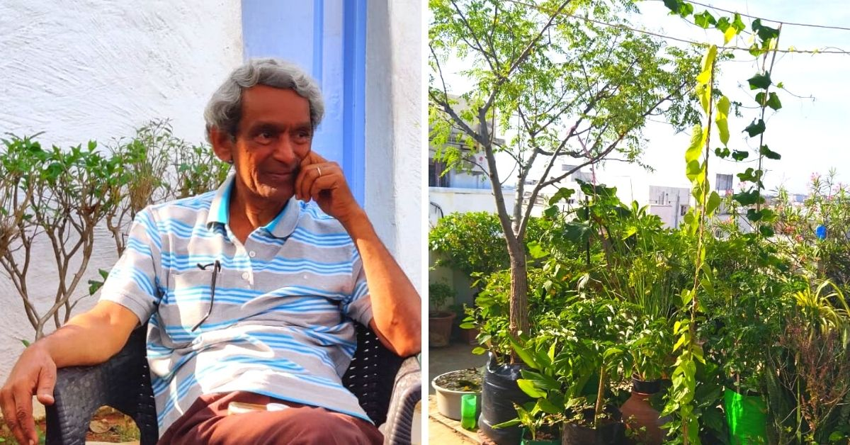From Aerial Potatoes to Israel Oranges, Retired Teacher Grows 200 Plants On Terrace!