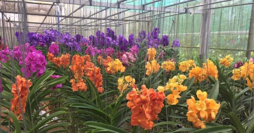 Growing Over 500 Varieties of Orchids, Kerala Woman Earns Rs. 3 Lakh a Month