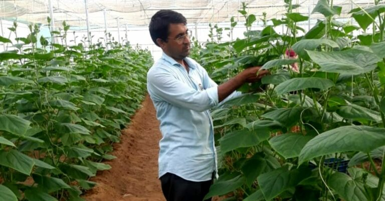 Jaipur Farmer Uses Natural Methods To Grow Cucumbers Worth Rs. 30 Lakh Per Year