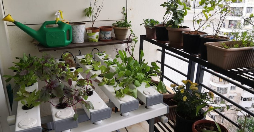 Bengaluru Biologist Shares How She Grows Greens in Her Balcony