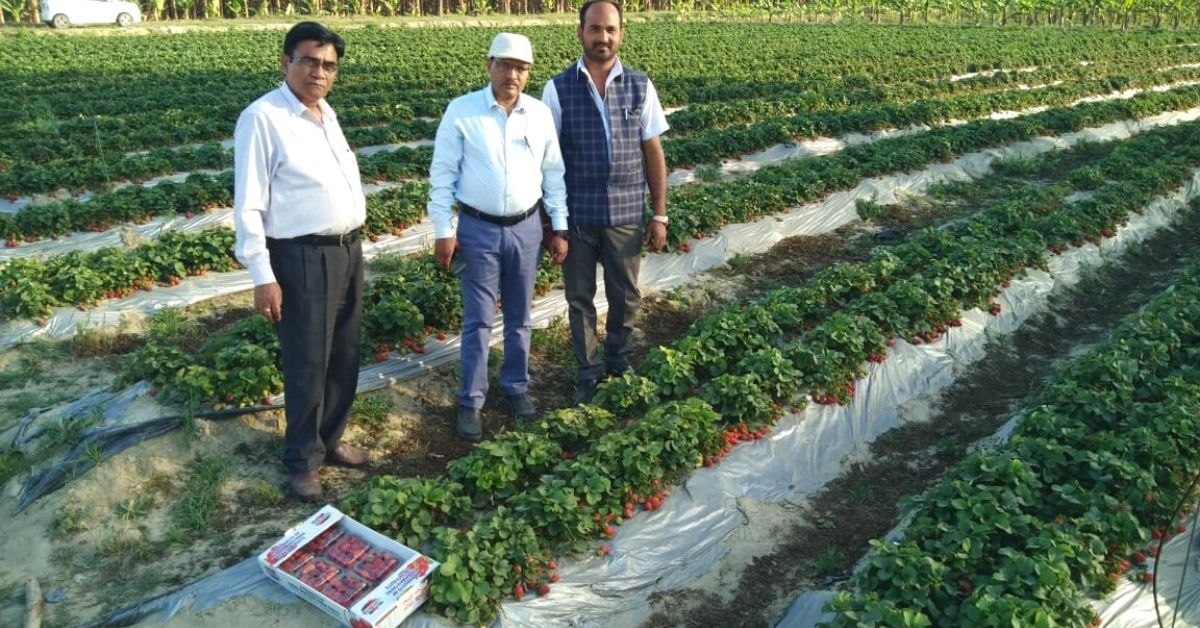 UP School Teacher Earns Lakhs From Part-Time Farming