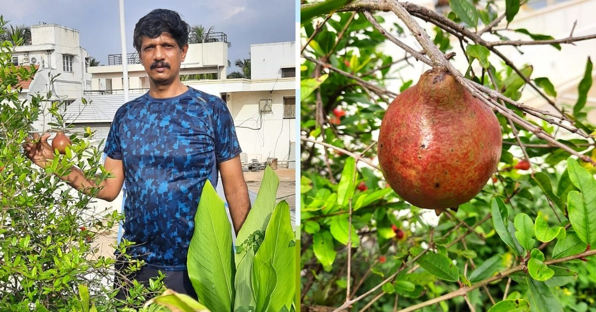 Curry Leaves to Drumstick, Bengaluru Man Grows Vegetable Forest In 10×10 Space