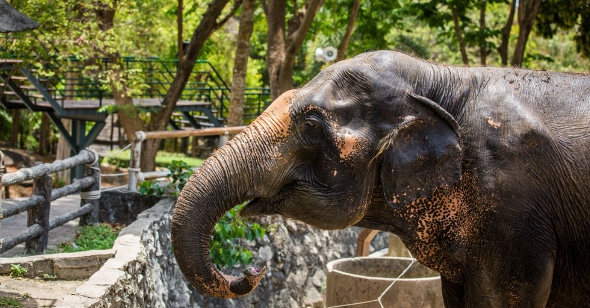 Want to Adopt an Elephant? Or a Lion? These Indian Zoos Make it Possible