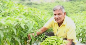 Rajasthan Farmer Boosts Income 100% With Chillies