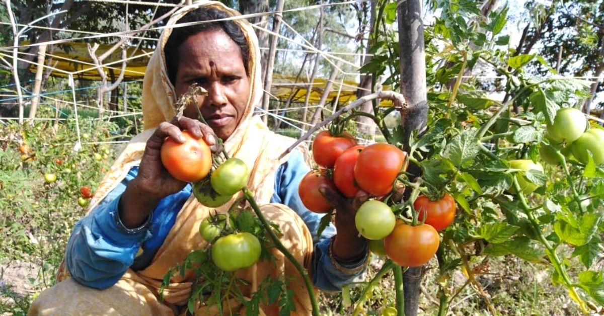MP Farmer's Bumper Crops & Profits Convinces Farmers in 6 villages to Turn Organic