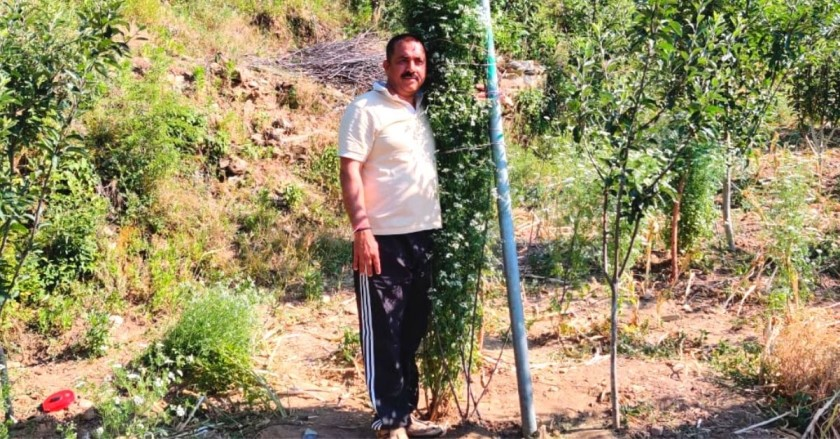 Uttarakhand Man Grows World's Tallest Coriander Plant