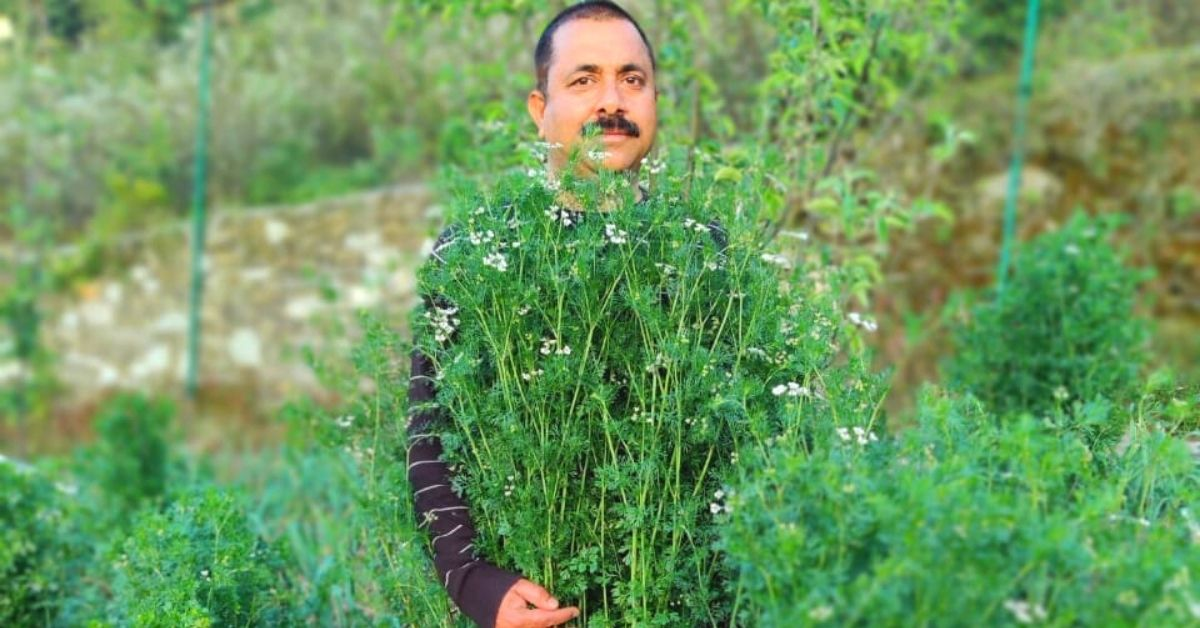 Trying to Save Apple Orchard, Uttarakhand Man Grows World's Tallest Coriander Plant