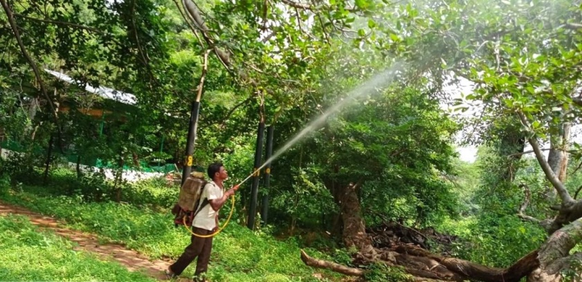 Telangana IAS Helps Save 700-YO Banyan Tree After 3 Years of Continuous Effort