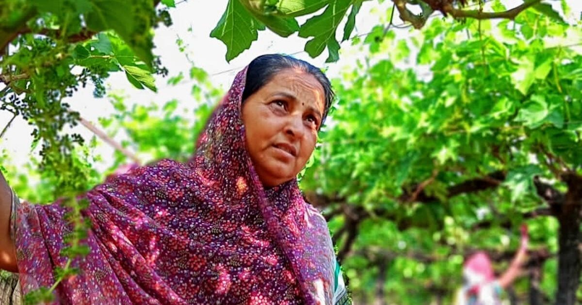 She Had a Debt of Rs 30 Lakh. Now Grapes Help Her Earn More Than That in 1 Year!