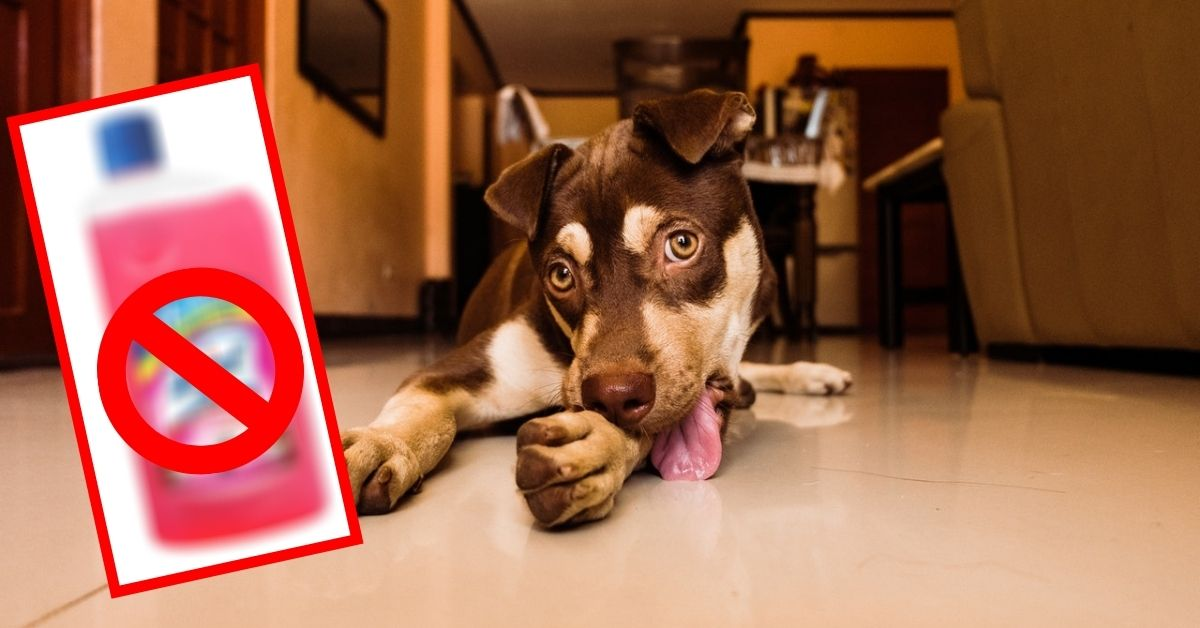 Attention Pet Owners: Is Your Floor Cleaner Harming Your Pet?