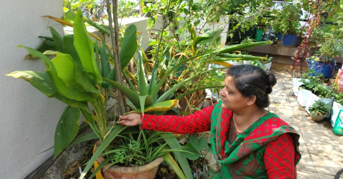 Growing Turmeric Is Easier Than You Think. Pune Woman Explains How