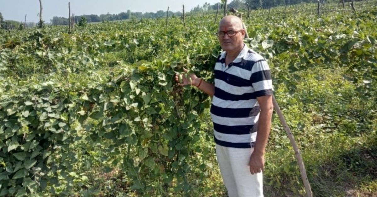UP Man Increases Earnings From Rs 11,000 to Rs 12 Lakh Through Banana Farming