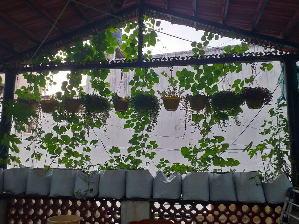 Organic Terrace Gardens Bangalore