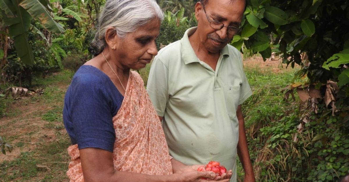 Fruits in Farm