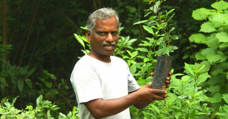 Tamil Nadu Man Single-Handedly Creates Lush Forest in 100 Acres of Barren Land